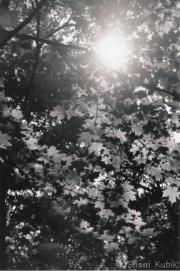 FallingShadows