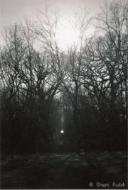 LightintheForest