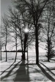 TreeShadows1