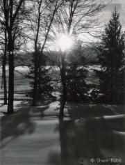 TreeShadows3